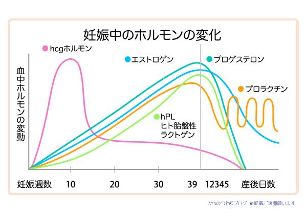 妊娠後期のホルモンの変化