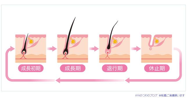 毛周期と産後の抜け毛